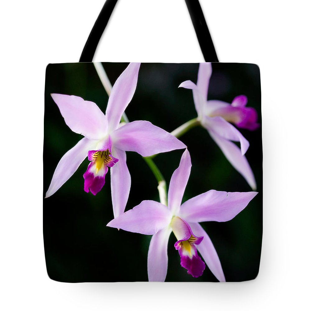 Orchid Tote Bag featuring the photograph Three Orchids by Marilyn Hunt