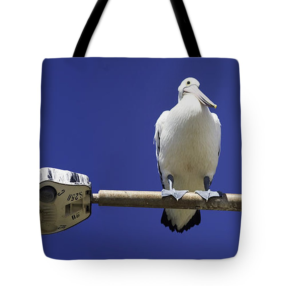 Australian White Pelicans Tote Bag featuring the photograph Three Pelicans On A Lamp Post by Avalon Fine Art Photography