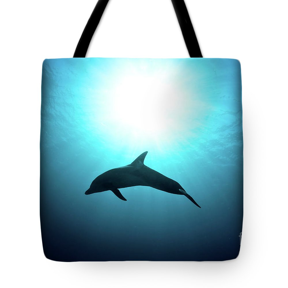Dolphin Tote Bag featuring the photograph three year old Dolphin by Hagai Nativ