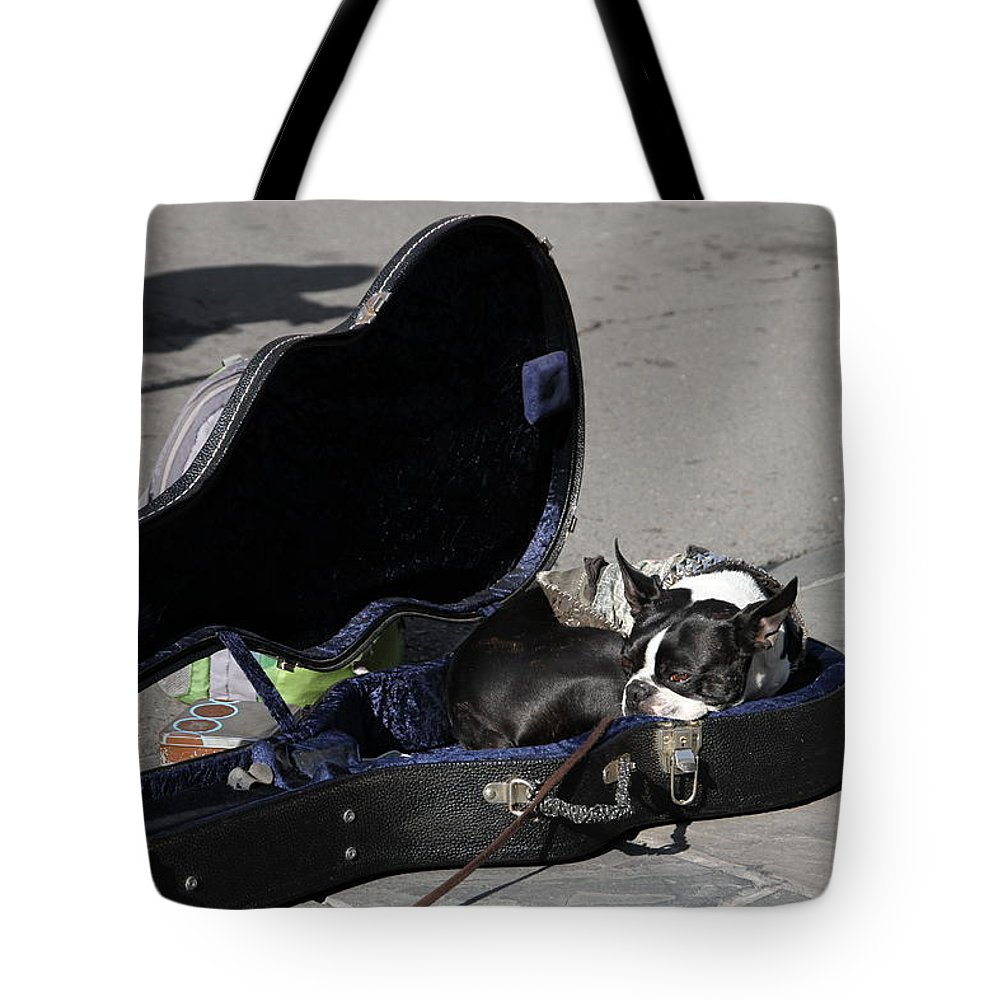 Pets Tote Bag featuring the photograph Throw Me The Money by Chuck Johnson