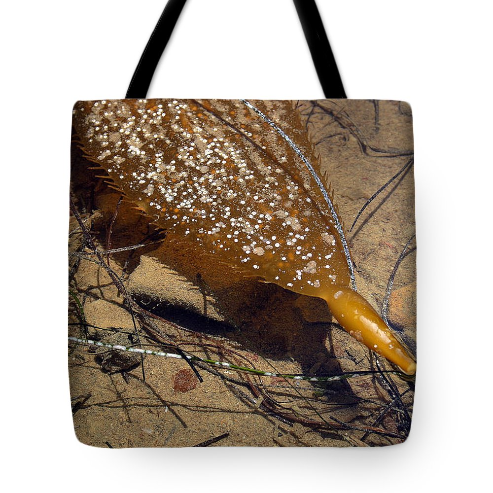 Seascape Tote Bag featuring the photograph Tidepool Kelp by Mary Haber