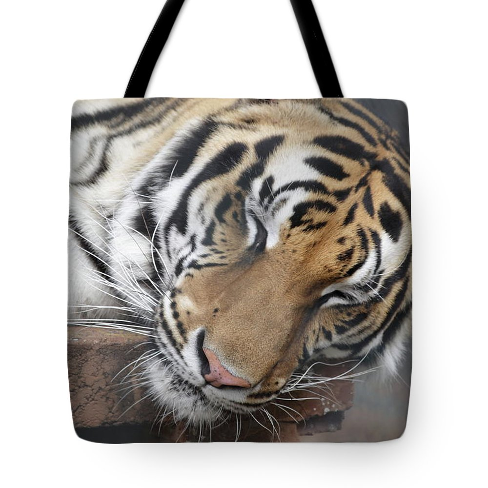 Tiger Tote Bag featuring the photograph Tiger 2 by Jim Allsopp