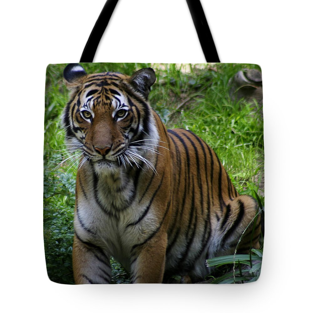 Zoo Tote Bag featuring the photograph Tiger by Anthony Jones