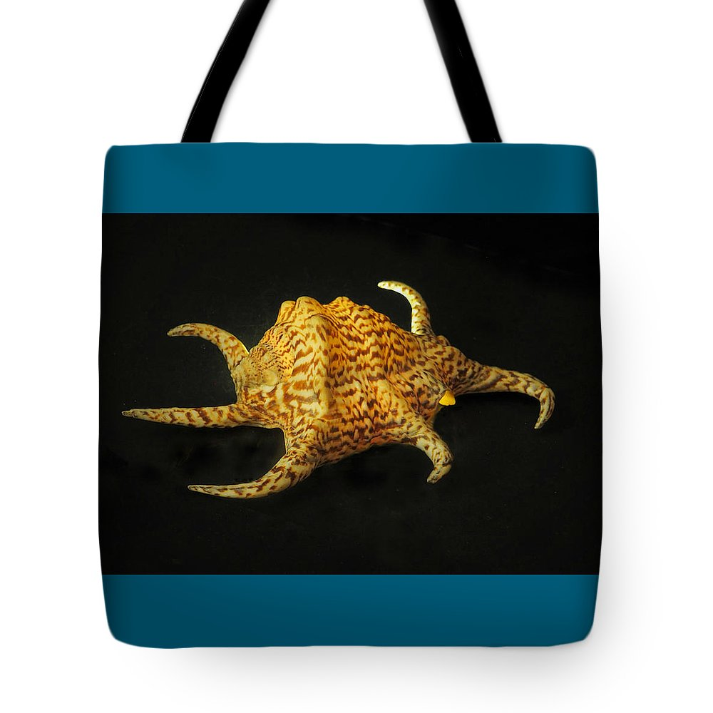 Seashell Tote Bag featuring the photograph Tiger Conch Seashell by MuzioArt Photography