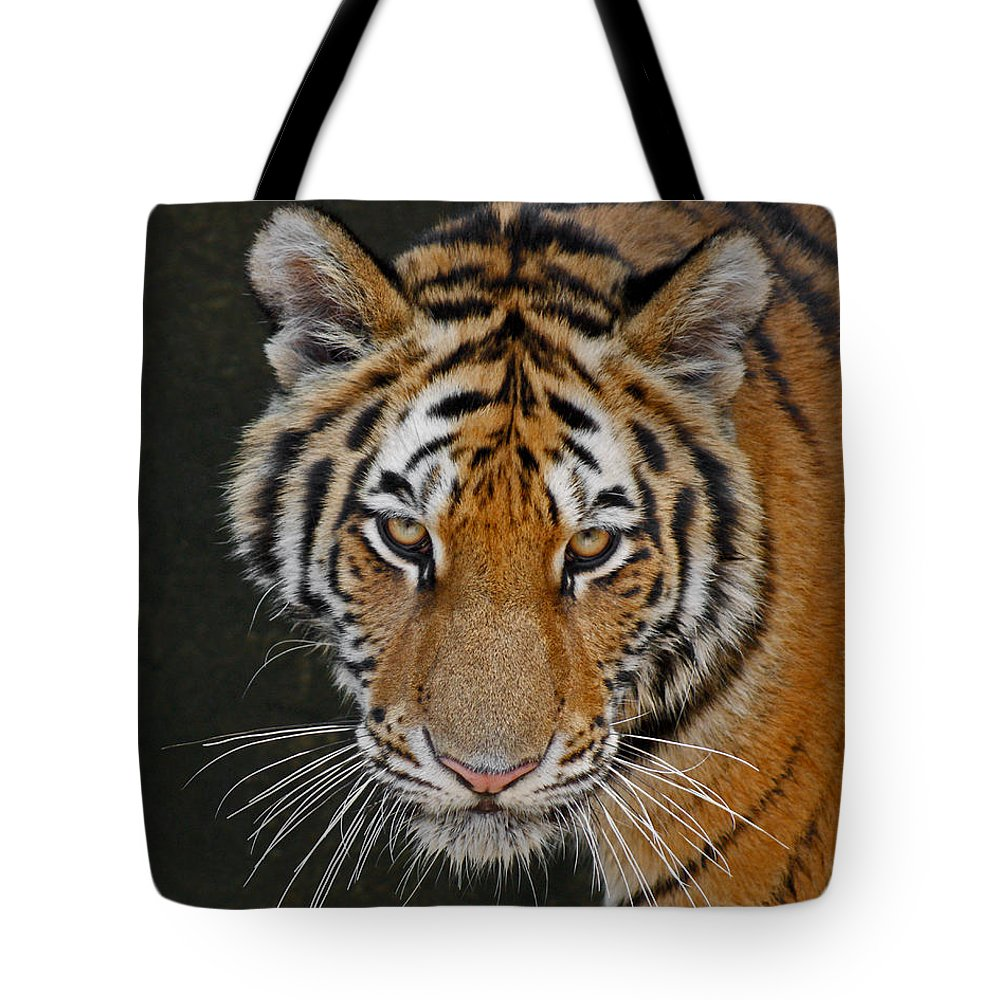 Tiger Tote Bag featuring the photograph Tiger Hunting by Ernie Echols