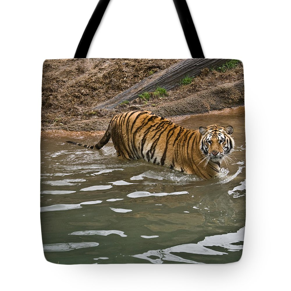 Tiger Tote Bag featuring the photograph Tiger In The Water by Douglas Barnett
