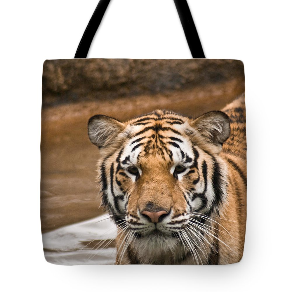 Tiger Tote Bag featuring the photograph Tiger Wading Stream by Douglas Barnett