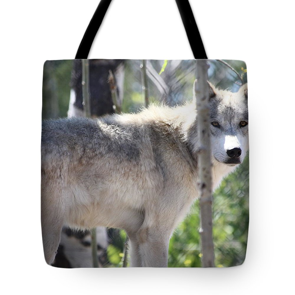 Timber Wolf Tote Bag featuring the photograph Timber Wolf by Shane Bechler