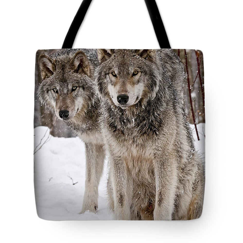 Michael Cummings Tote Bag featuring the photograph Timber Wolves In Winter by Michael Cummings