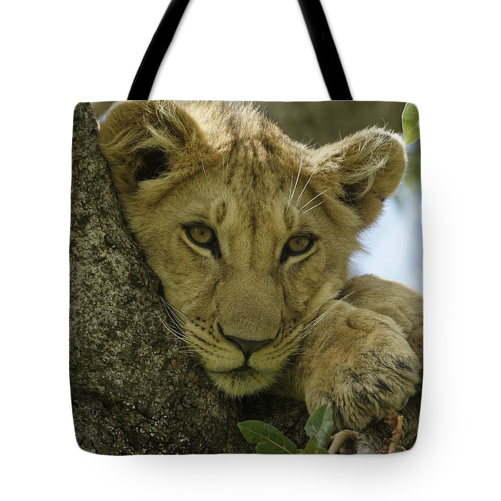 Africa Tote Bag featuring the photograph Time for a Nap by Michele Burgess