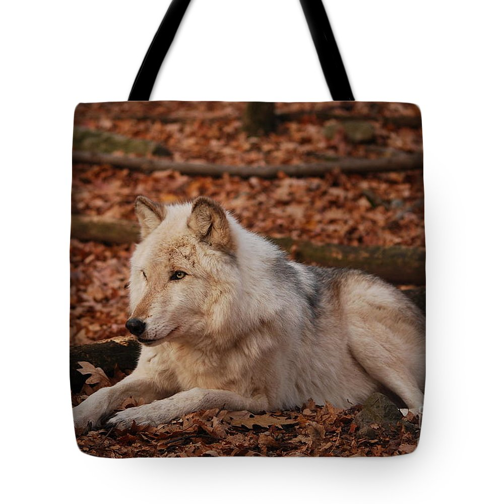 Wolf Tote Bag featuring the photograph Time To Rest by Lori Tambakis