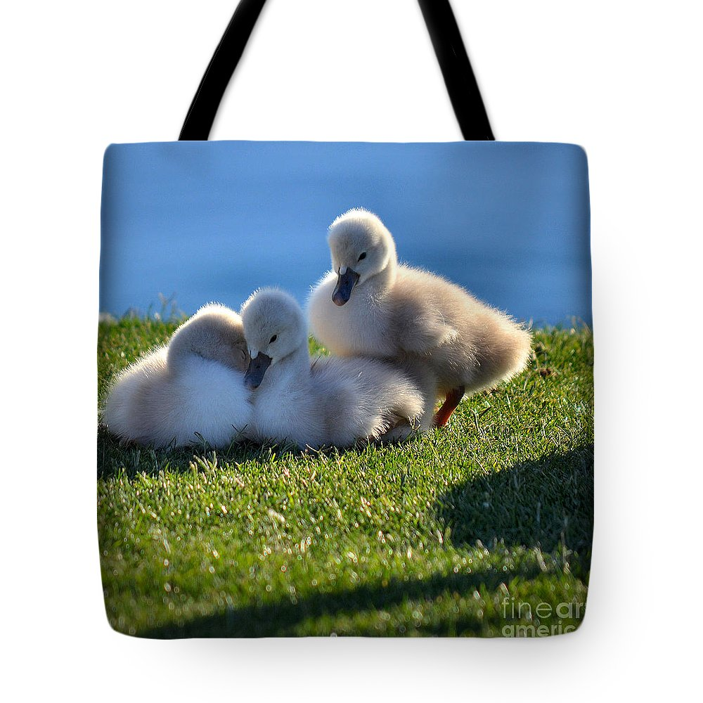 Cygnets Tote Bag featuring the photograph Time To Snuggle by Deb Halloran