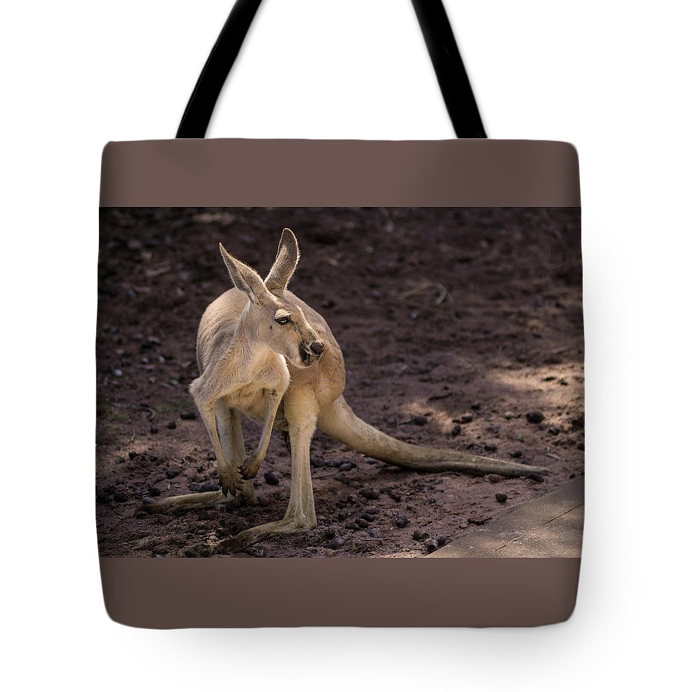 Kangaroo Tote Bag featuring the photograph Time To Turn Around by Tania Read