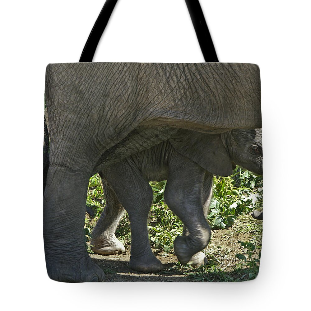 Africa Tote Bag featuring the photograph Tiny Newborn by Michele Burgess