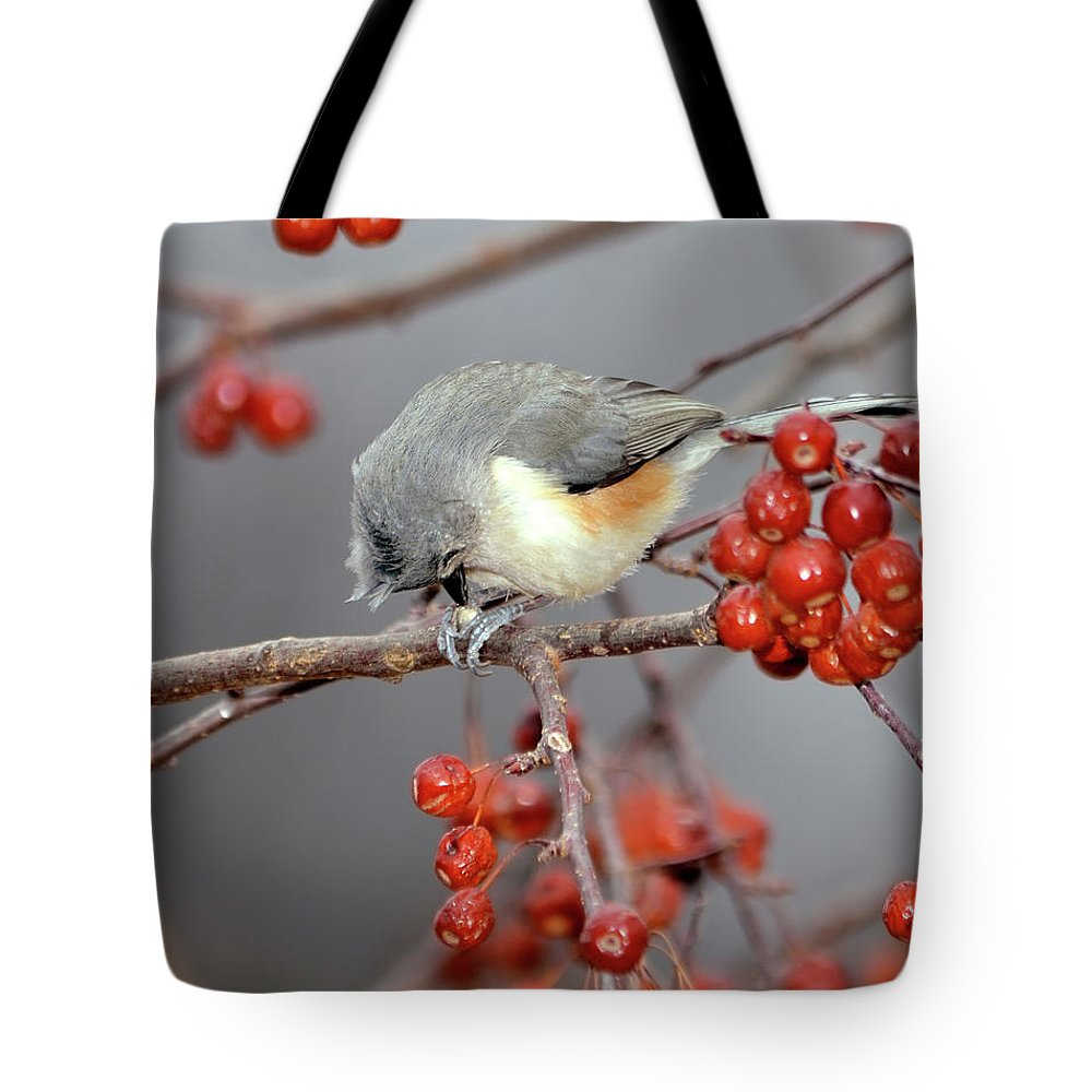 Tufted Titmouse Tote Bag featuring the photograph Titmouse Breakfast by Betty LaRue