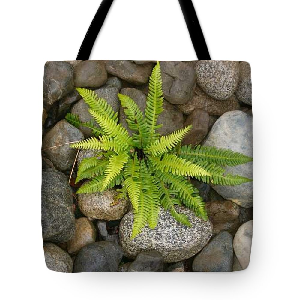Fern In Rocks Tote Bag featuring the photograph Tofino Fern 2 by Claudia Stewart