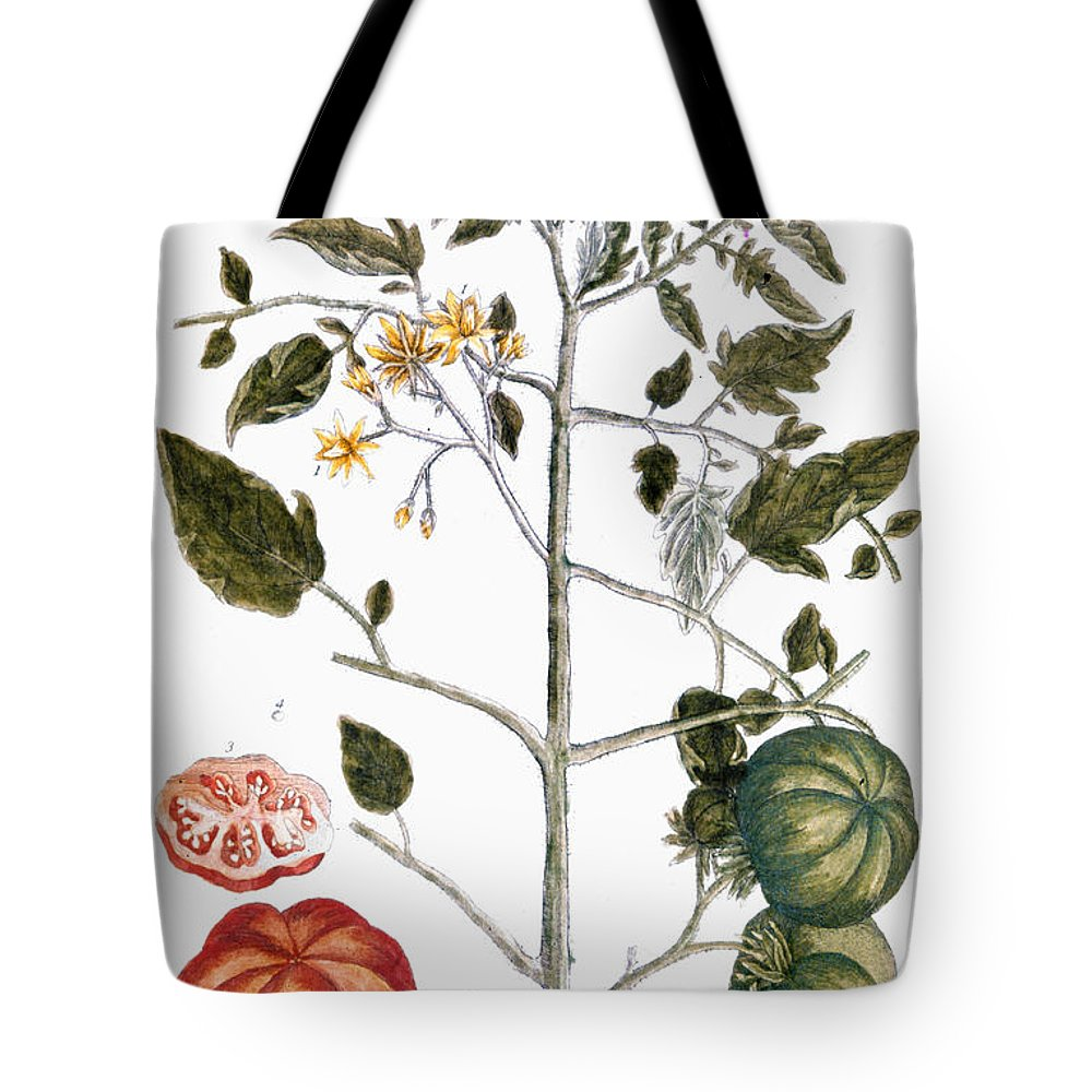 1730s Tote Bag featuring the photograph Tomato Plant, 1735 by Granger