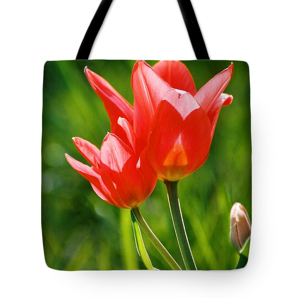 Flowers Tote Bag featuring the photograph Toronto Tulip by Steve Karol