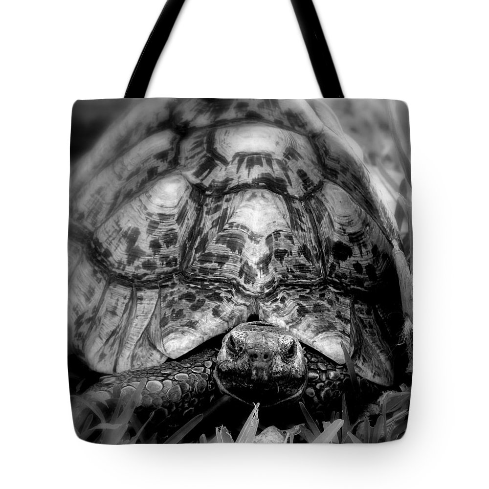 Tortalicious Tote Bag featuring the photograph Tortalicious by Ed Smith