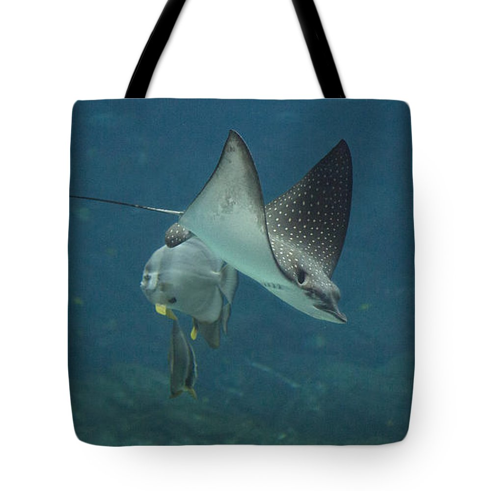 Shark Tote Bag featuring the photograph Tranquil Sea Creatures by Betsy Knapp