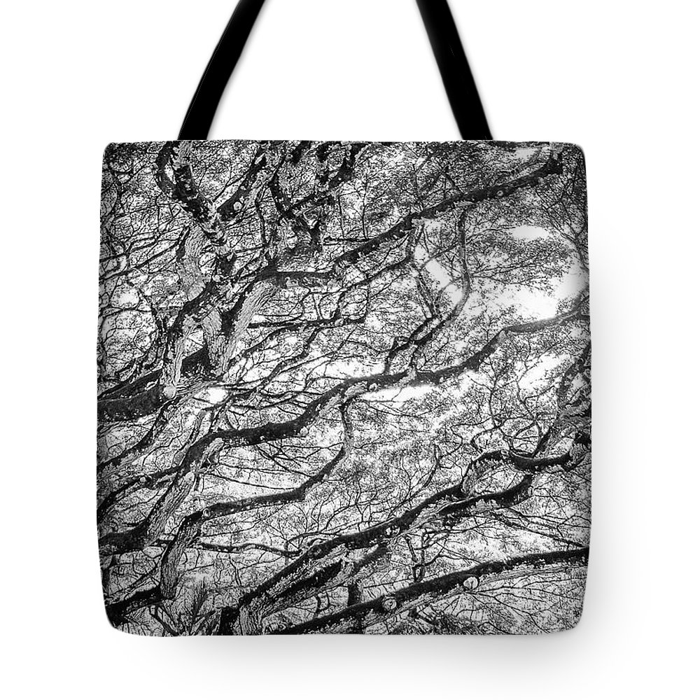 Trees Tote Bag featuring the photograph Seek Purpose by Jeanne Jackson