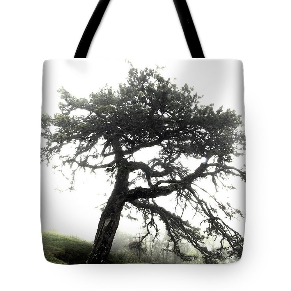 Hdr Tote Bag featuring the photograph Tree by Alex Grichenko