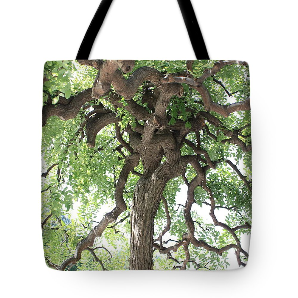 Tree Tote Bag featuring the photograph Tree At Ming Tombs by Carol Groenen
