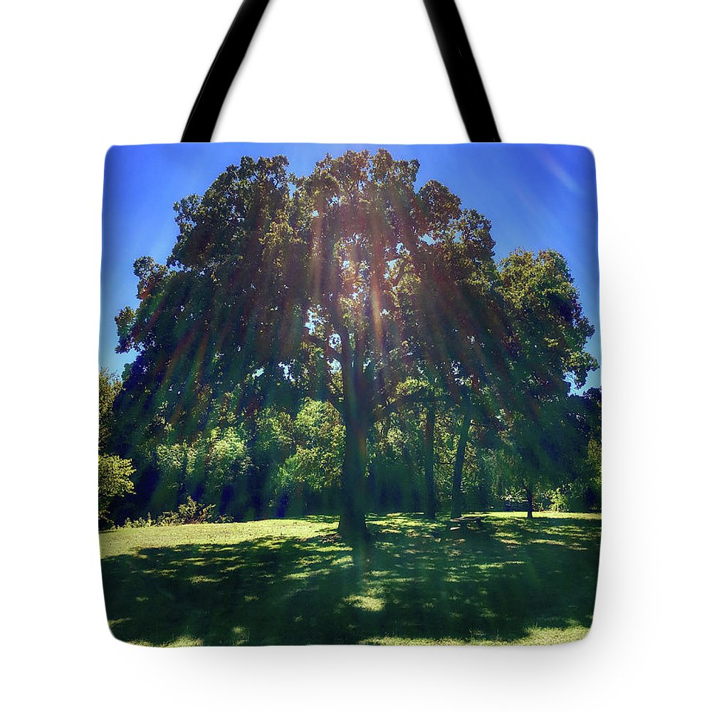 Tree Tote Bag featuring the photograph Tree Bathed In Sun by Doris Aguirre
