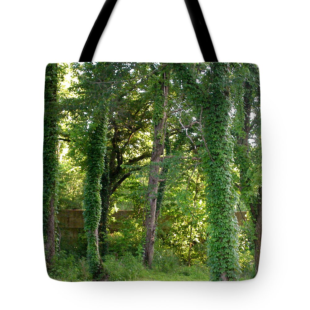Trees Tote Bag featuring the photograph Tree Cathedral 2 by Anne Cameron Cutri