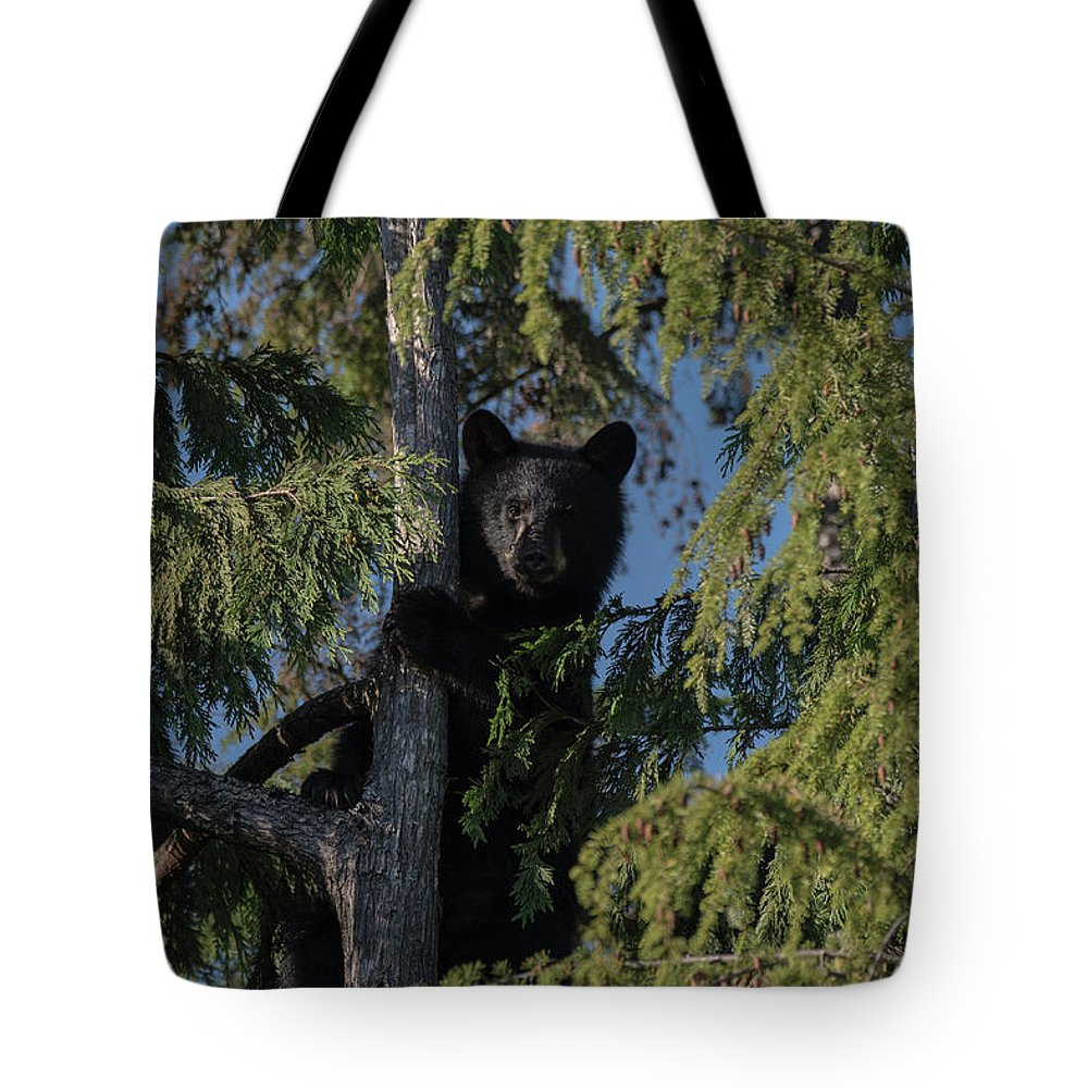 Tree Tote Bag featuring the photograph Tree Climbers by Rod Wiens