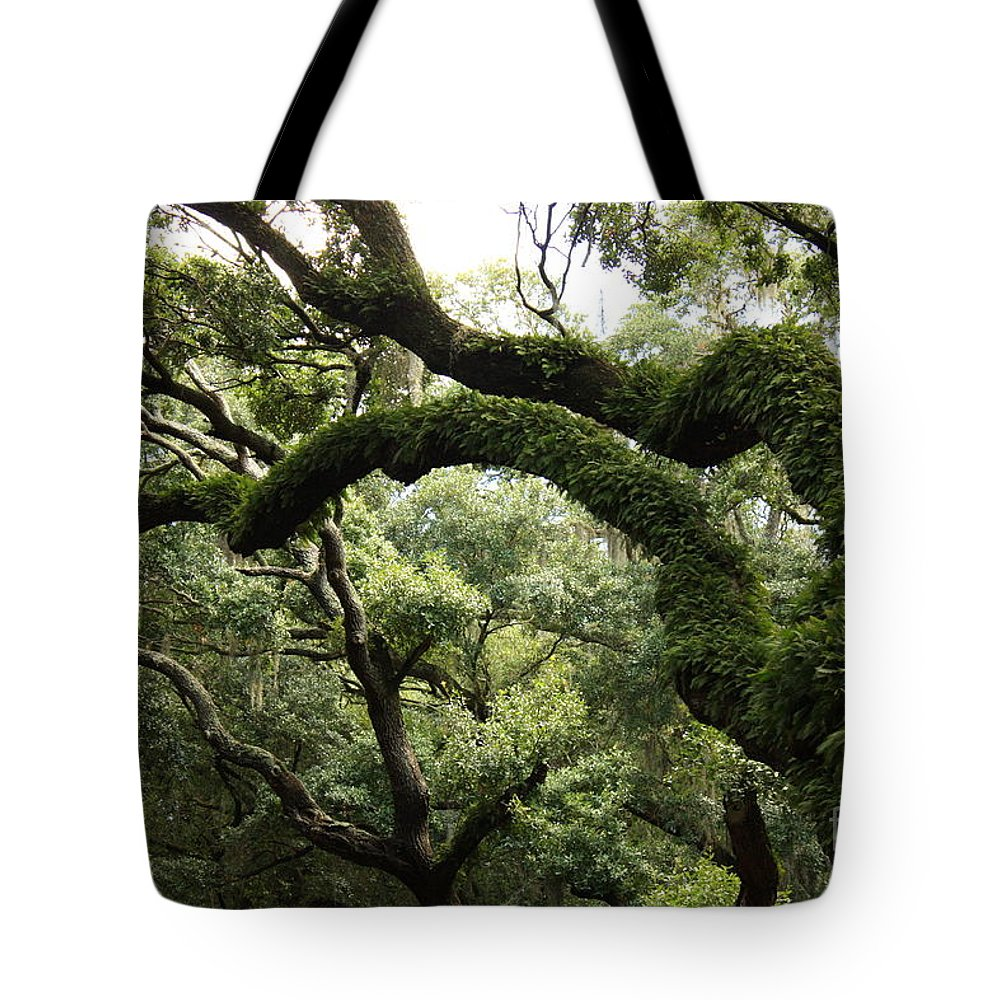 Tree Tote Bag featuring the photograph Tree Drama by Carol Groenen
