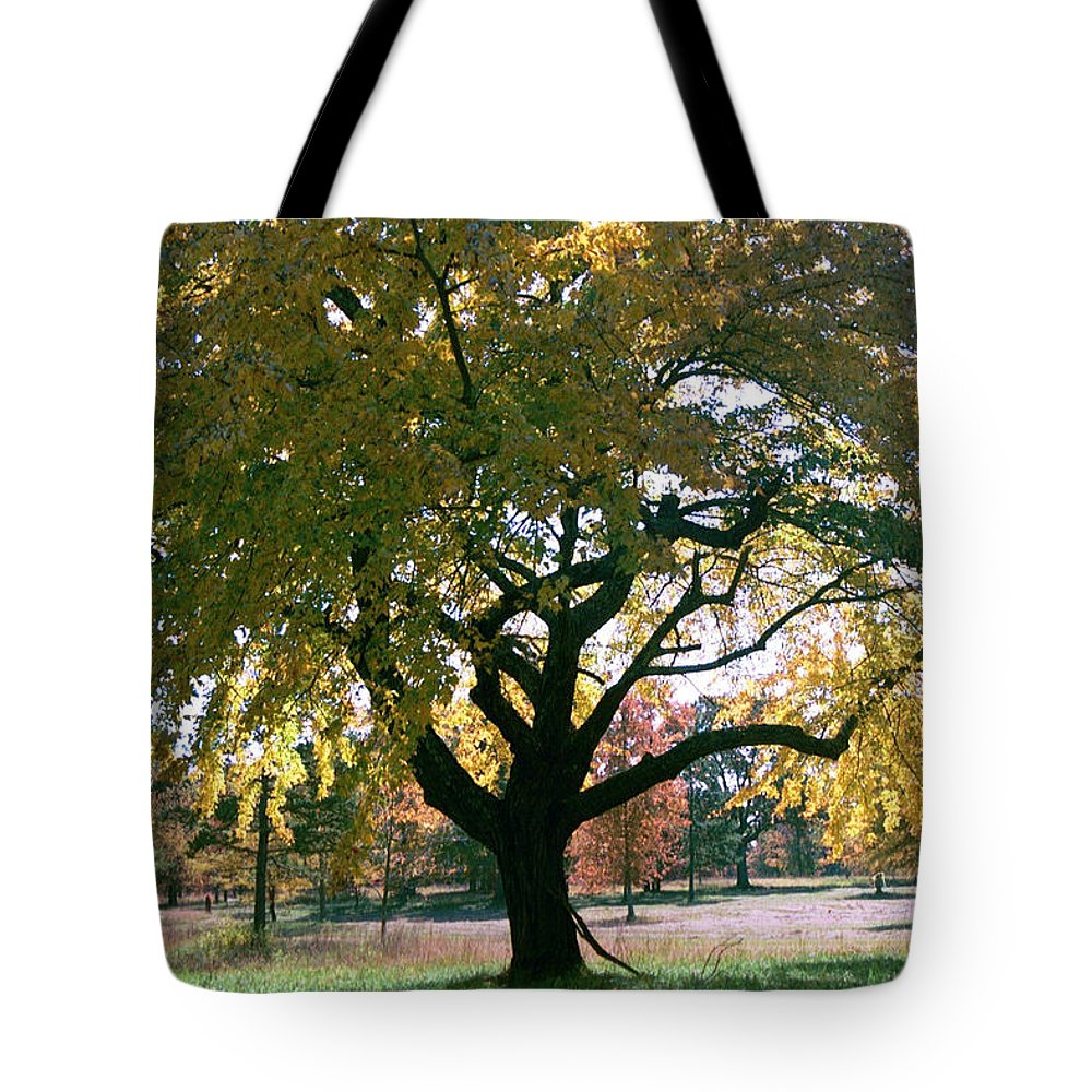 Tree Tote Bag featuring the photograph Tree by Flavia Westerwelle