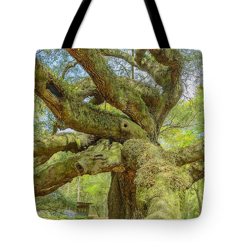 South Carolina Tote Bag featuring the photograph Tree For The Ages by Elvis Vaughn