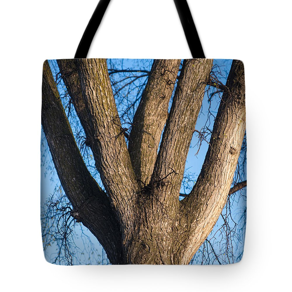 Tree Tote Bag featuring the photograph Tree Fork by Donald Erickson