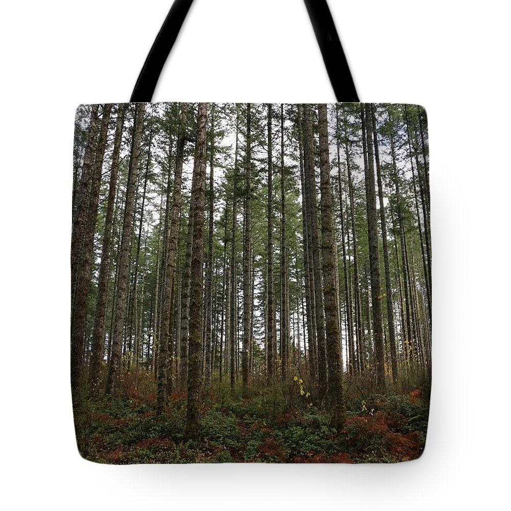 Trees Tote Bag featuring the photograph Tree Hugger's Paradise by Dani Keating