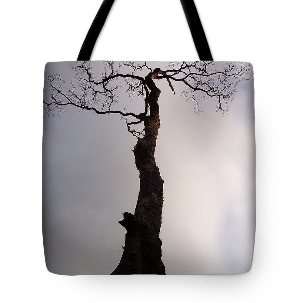 Tree Tote Bag featuring the photograph Tree by Vishal Mutakekar