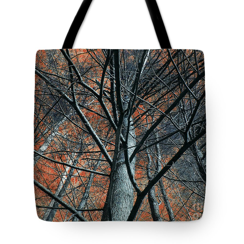 Trees Tote Bag featuring the photograph Trees On Red. by Itai Minovitz