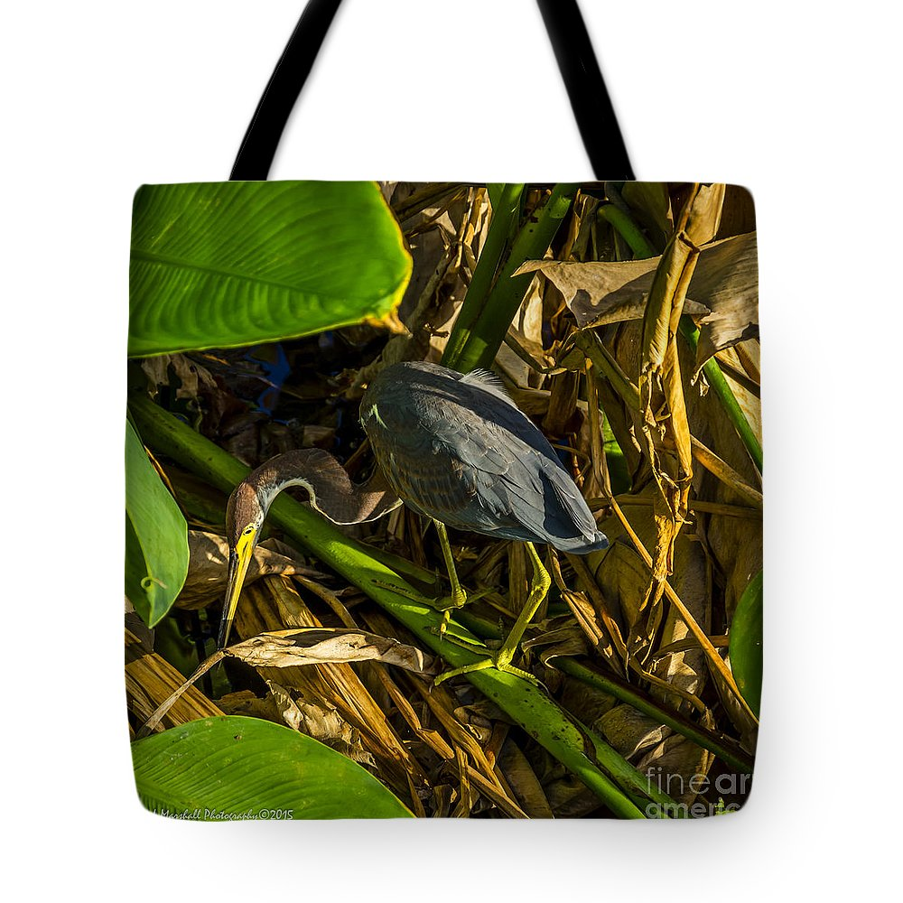 Delray Beach Tote Bag featuring the photograph Tri-color Heron 5 by Nancy L Marshall