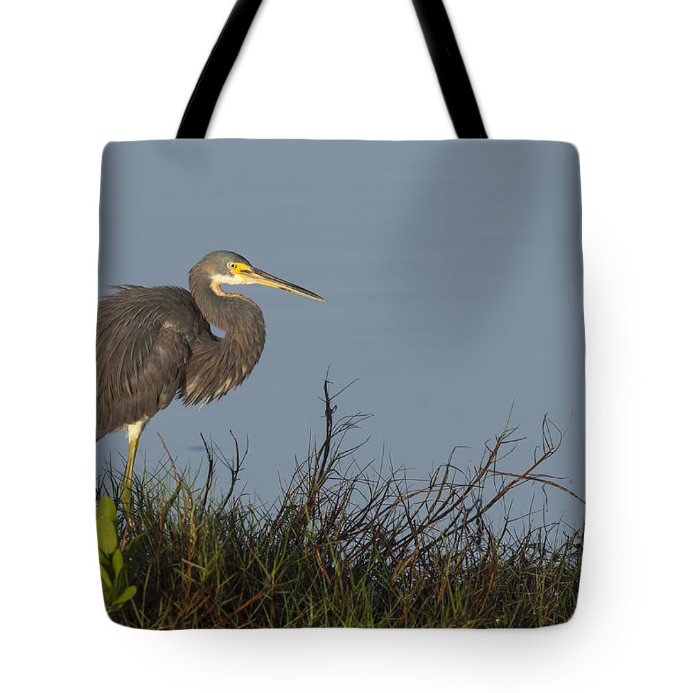 Tri-colored Tote Bag featuring the photograph Tri-colored Heron In The Morning Light by David Watkins