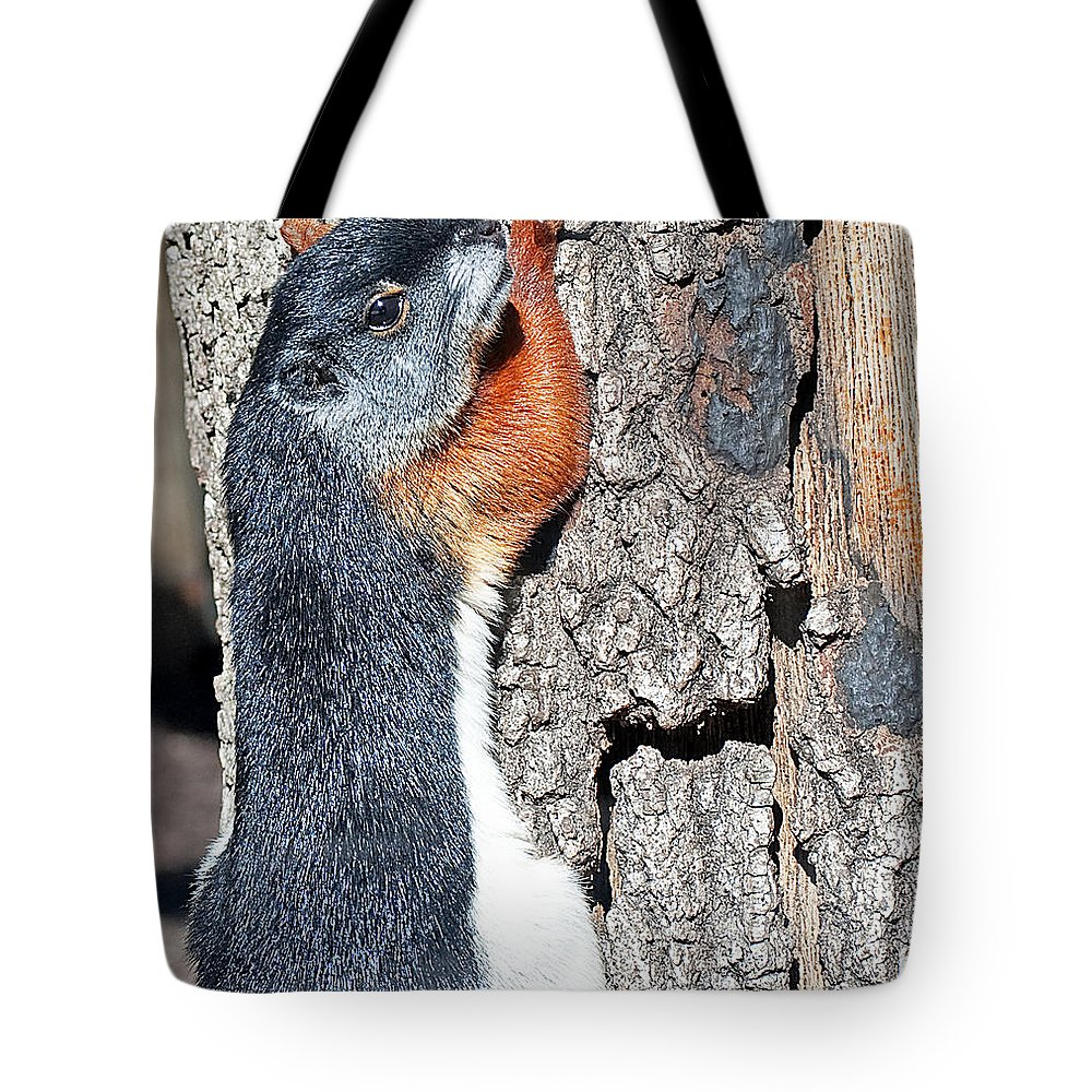 Squirrel Tote Bag featuring the photograph Tricolored Squirrel by Kenneth Albin