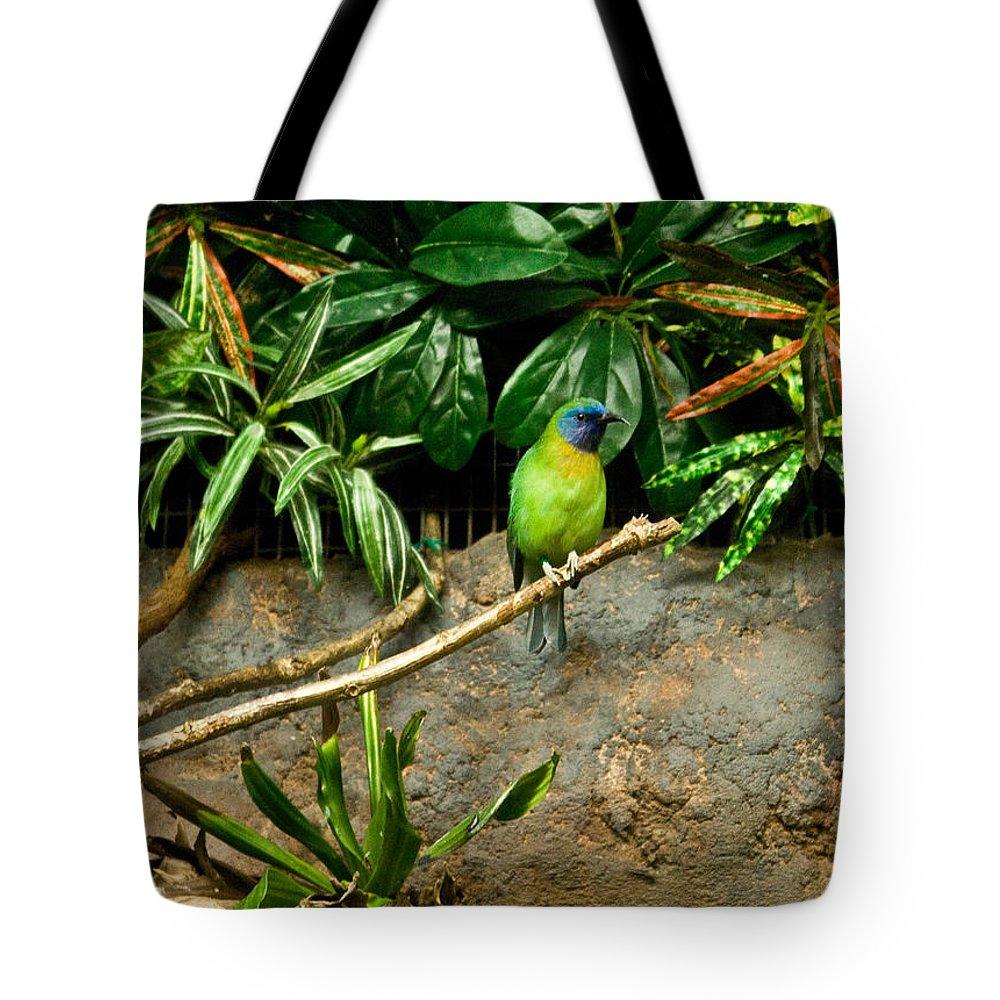 Tropical Tote Bag featuring the photograph Tropical Bird 3 by Douglas Barnett