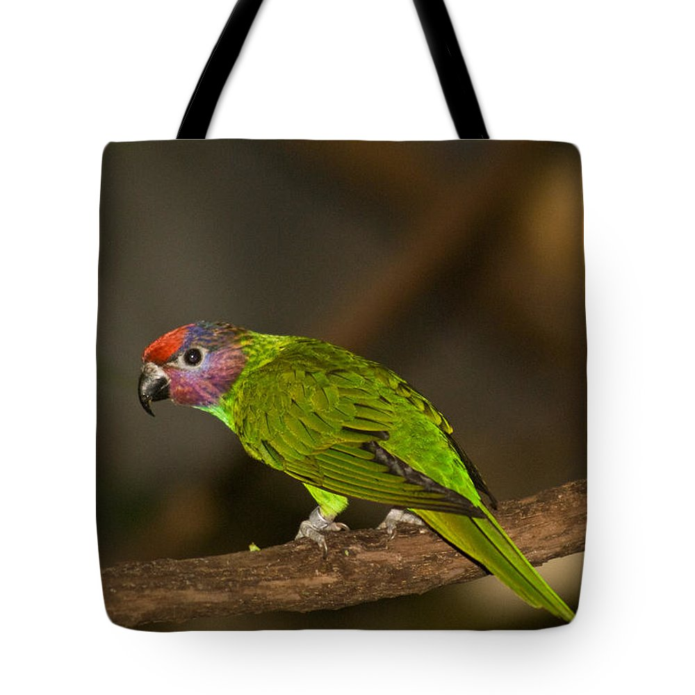 Tropical Tote Bag featuring the photograph Tropical Bird by Douglas Barnett