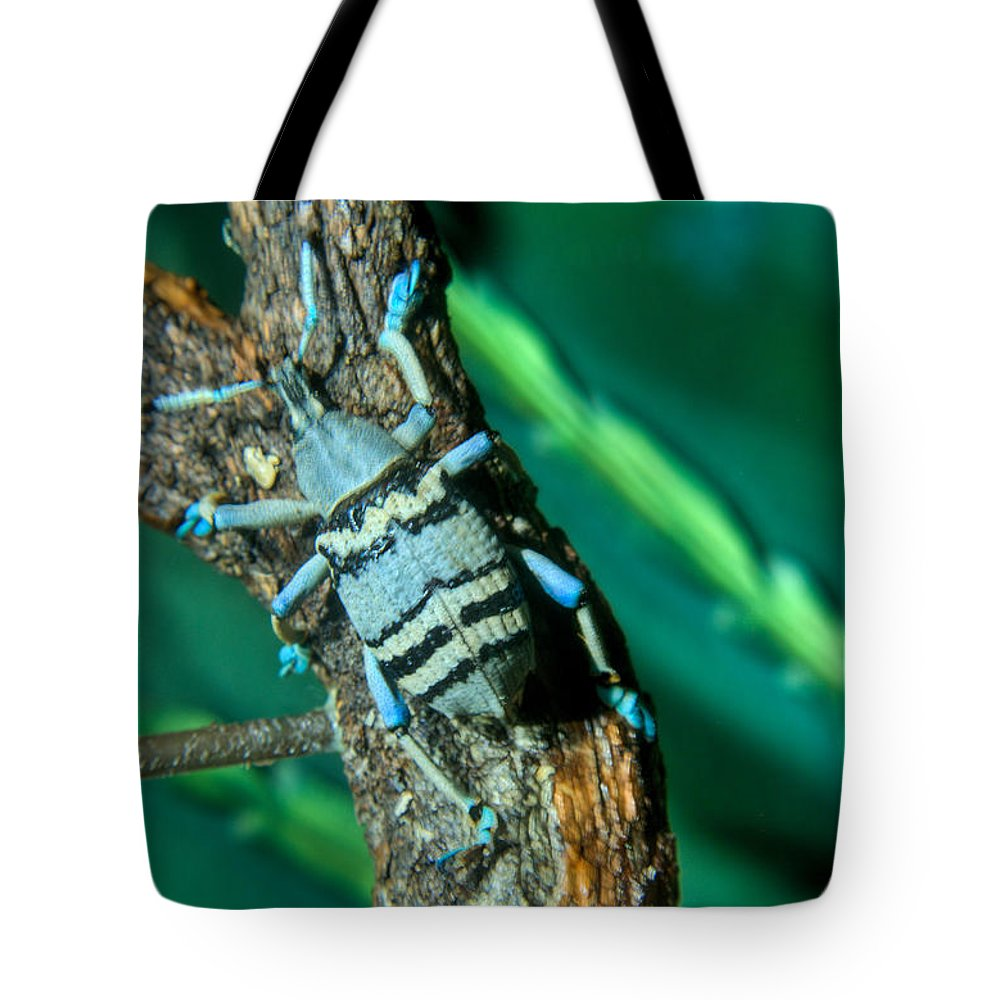 Blue Tote Bag featuring the photograph Tropical Blue Weevil by Douglas Barnett