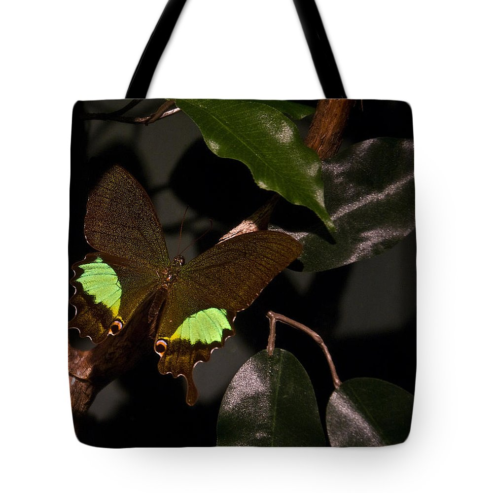 Tropical Tote Bag featuring the photograph Tropical Buterfly by Douglas Barnett