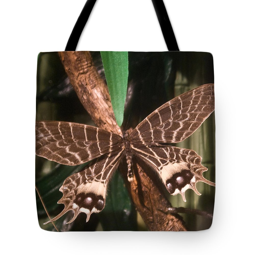 Butterfly Tote Bag featuring the photograph Tropical Butterfly by Douglas Barnett
