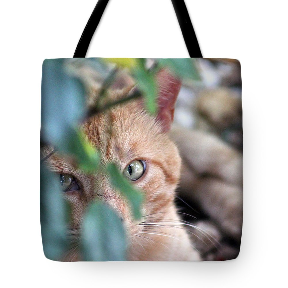 Cat Tote Bag featuring the photograph Tucker - The Cat by Bill And Deb Hayes