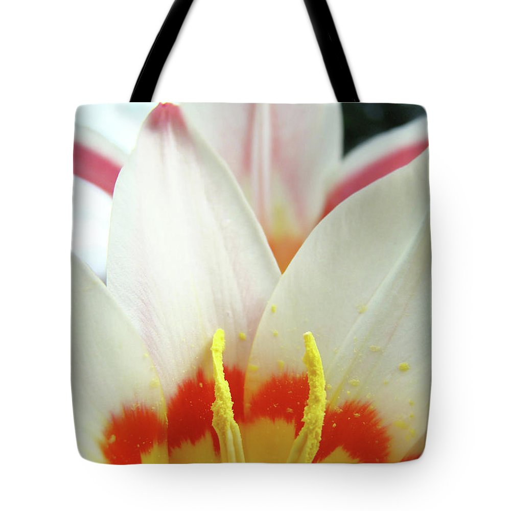 �tulips Artwork� Tote Bag featuring the photograph Tulip Flowers Art Prints 4 Spring White Tulip Flower Macro Floral Art Nature by Baslee Troutman