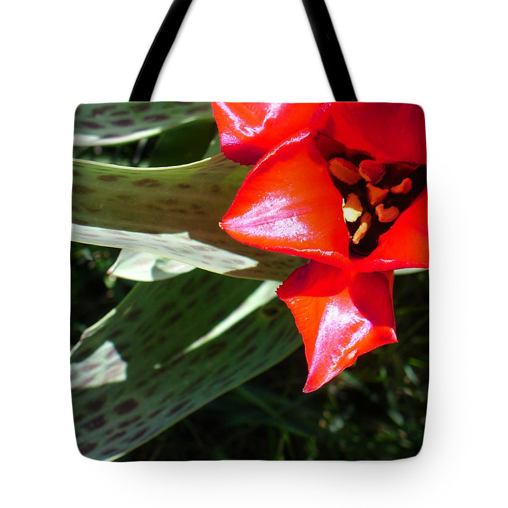 Tulip Tote Bag featuring the photograph Tulip by Steve Karol