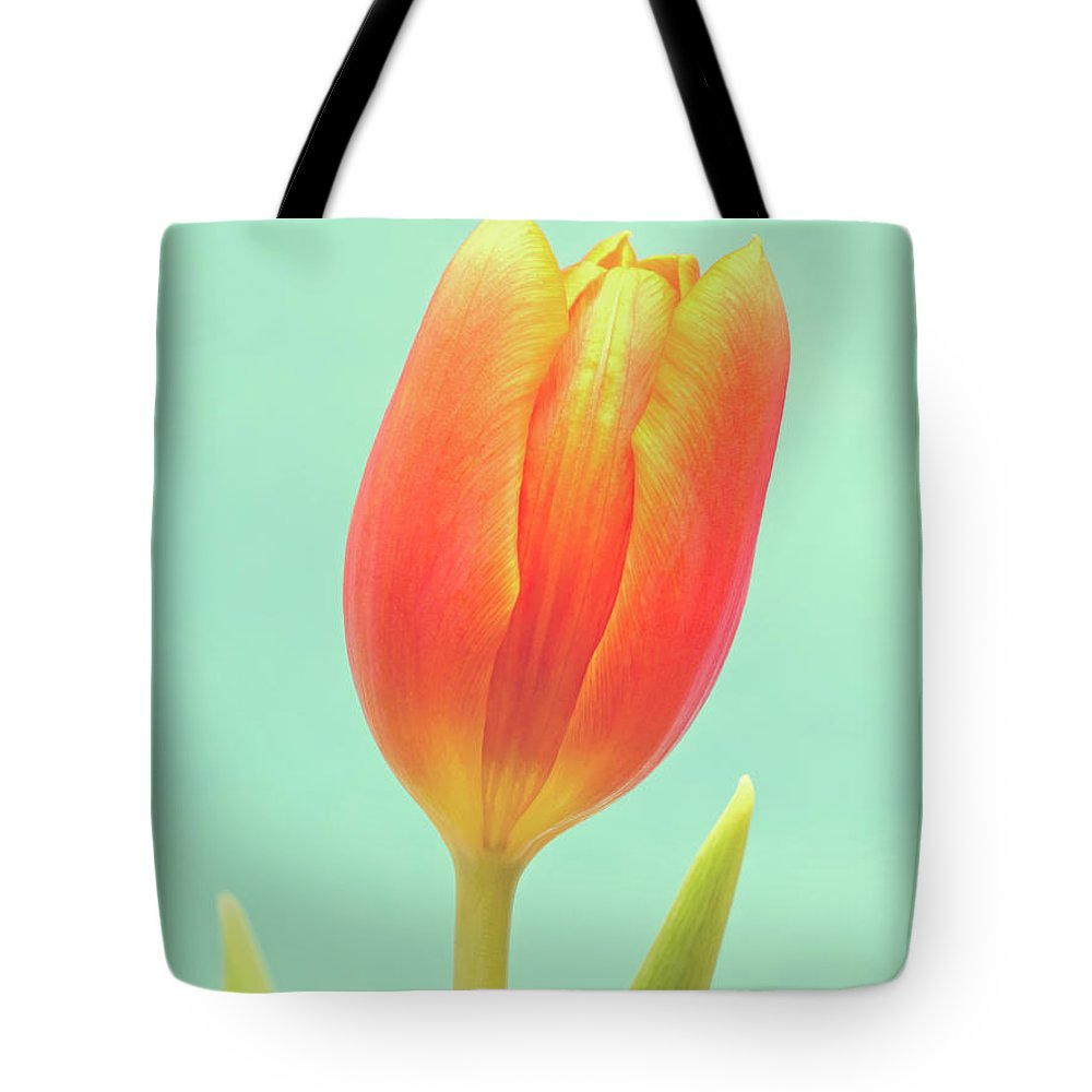Dutch Tulip Lifestyle Products