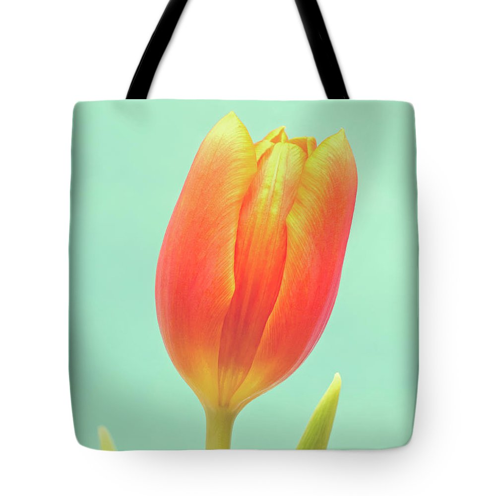 Tulip; Orange; Flower; Blue; Background; Green; Colorful; Close-up; Closeup; Beauty; Beautiful; Natural; Nature; Single; One; Vertical; Negative Space; Nobody; Bloom; Blossom; Easter; Spring; Flora; Season; Stem; Leaf; Petals; Petal; Leaves; Dutch; Elegant; Fragile; Photography; Fine Art; Wim Lanclus; Art; Floral; Springtime; Delicate; Vibrant; Vivid; Minimal; Simple; Minimalism; Simplism; Minimalistic Tote Bag featuring the photograph Tulip by Wim Lanclus